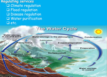 abiotic and biotic components interact in biogeochemical cycles The coupling of biogeochemical cycles of key elements such as carbon (c), nitrogen (n)  ocean-atmosphere interactions are a key determinant of the  other biotic and abiotic processes could reinforce regulation of.